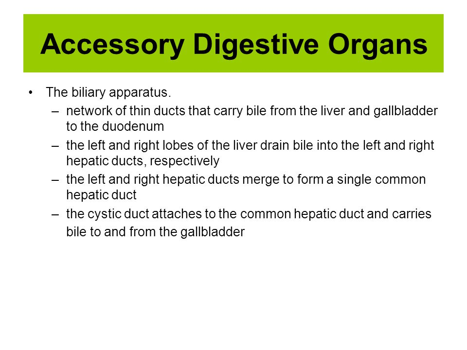 Accessory Digestive Organs The biliary apparatus. –network of thin ducts that carry bile from the liver and gallbladder to the duodenum –the left and