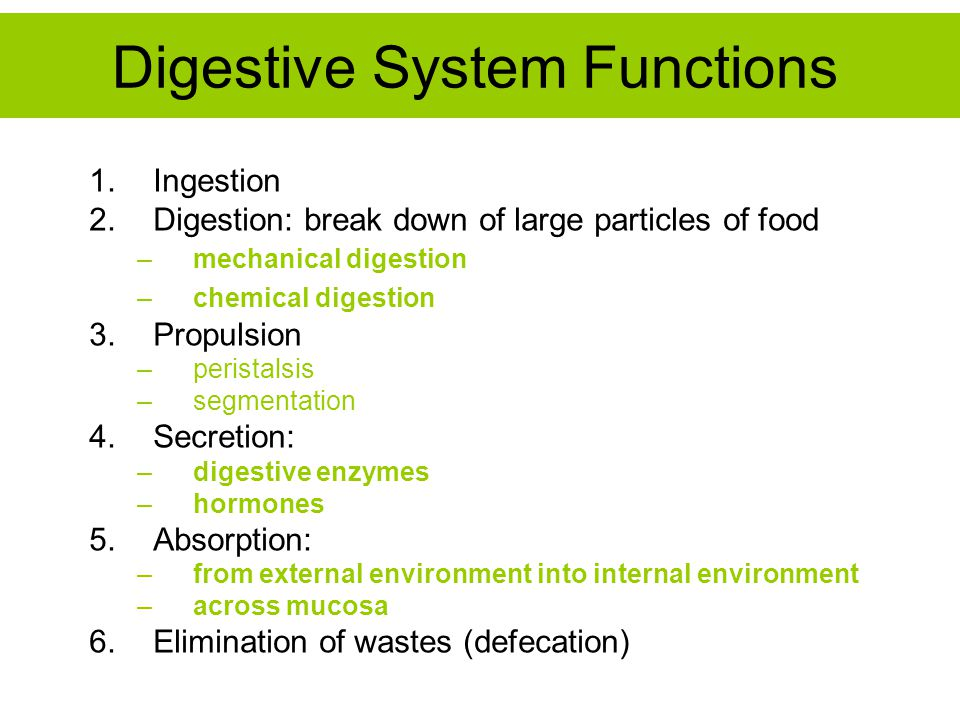 Digestive System Functions 1.Ingestion 2.Digestion: break down of large particles of food –mechanical digestion –chemical digestion 3.Propulsion –peri