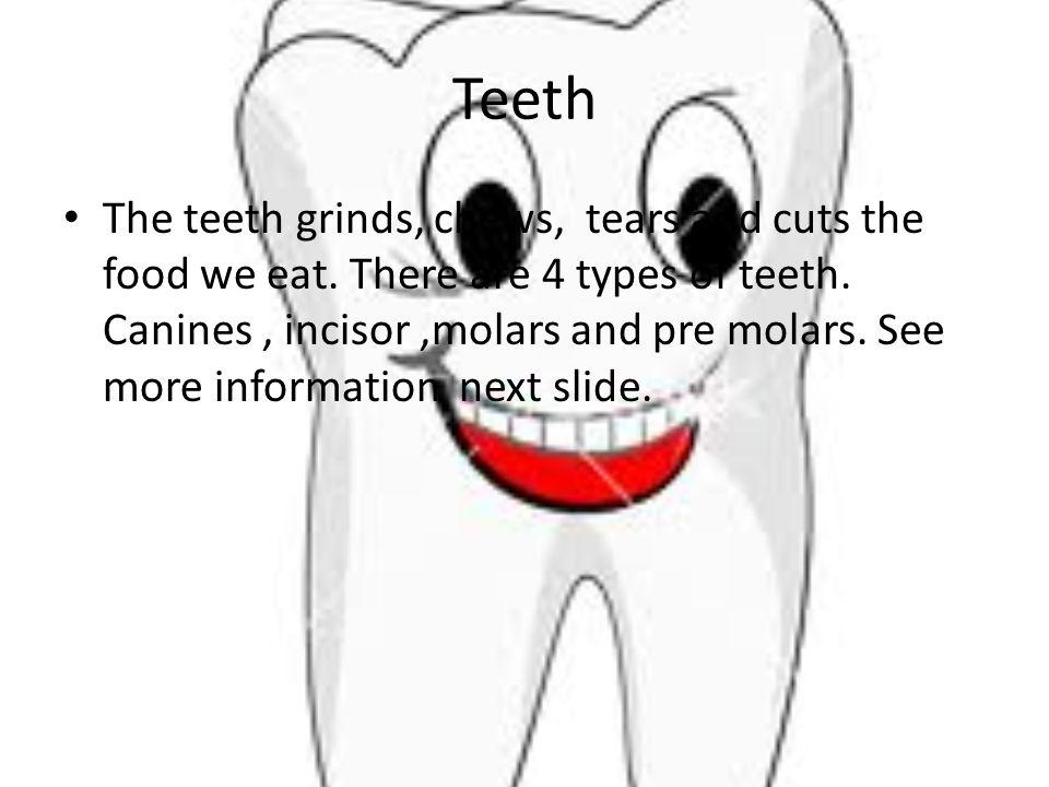 Teeth The teeth grinds, chews, tears and cuts the food we eat.