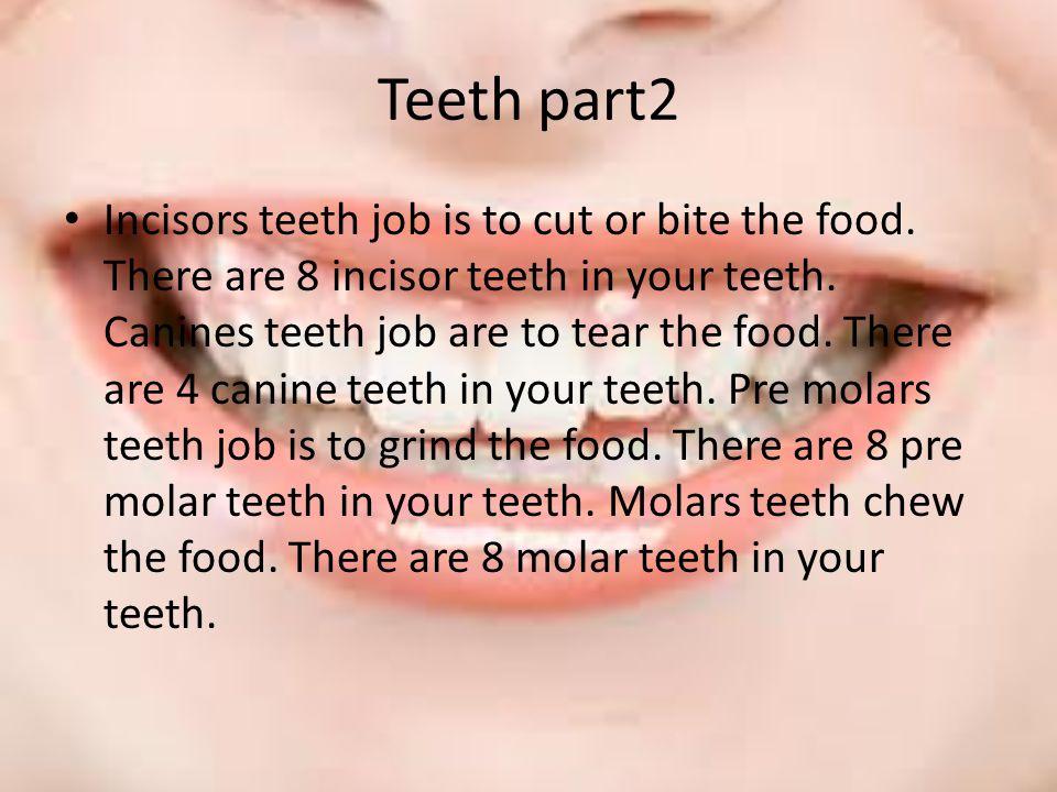 Teeth part2 Incisors teeth job is to cut or bite the food.