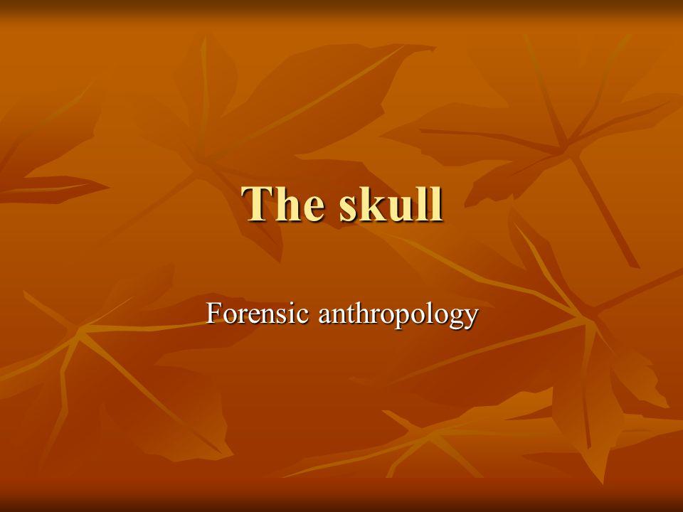 The skull Forensic anthropology