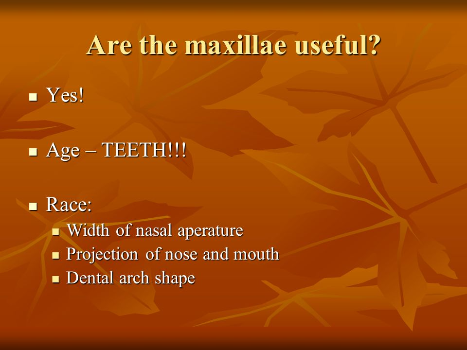 Are the maxillae useful? Yes! Yes! Age – TEETH!!! Age – TEETH!!! Race: Race: Width of nasal aperature Width of nasal aperature Projection of nose and
