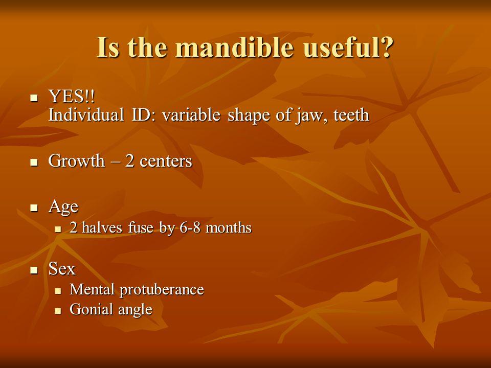 Is the mandible useful? YES!! Individual ID: variable shape of jaw, teeth YES!! Individual ID: variable shape of jaw, teeth Growth – 2 centers Growth