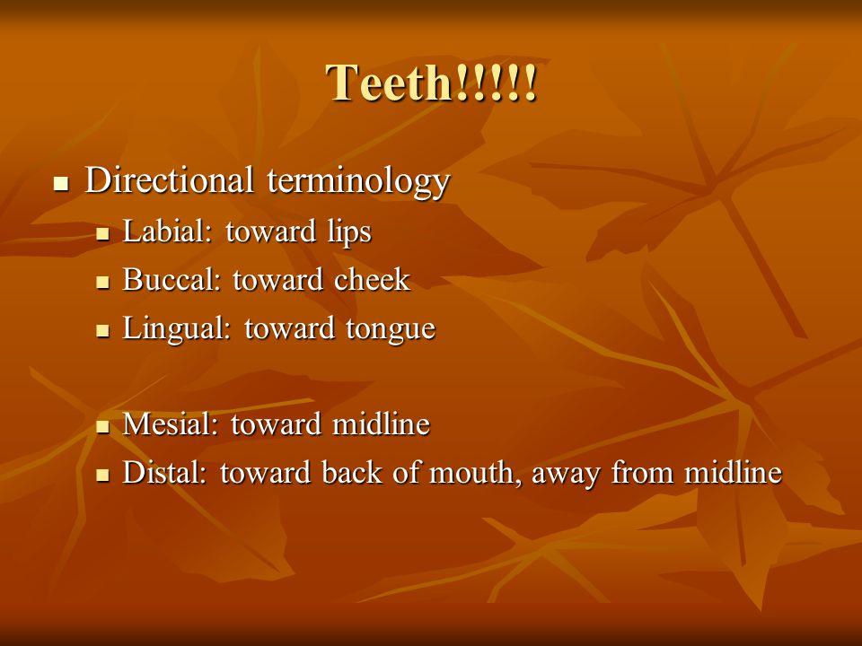 Teeth!!!!! Directional terminology Directional terminology Labial: toward lips Labial: toward lips Buccal: toward cheek Buccal: toward cheek Lingual: