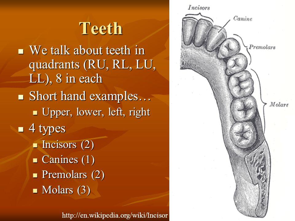 Teeth We talk about teeth in quadrants (RU, RL, LU, LL), 8 in each We talk about teeth in quadrants (RU, RL, LU, LL), 8 in each Short hand examples… S