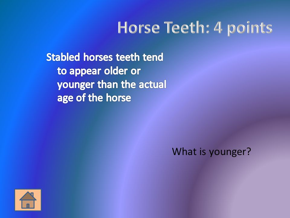 What is a draft horse?