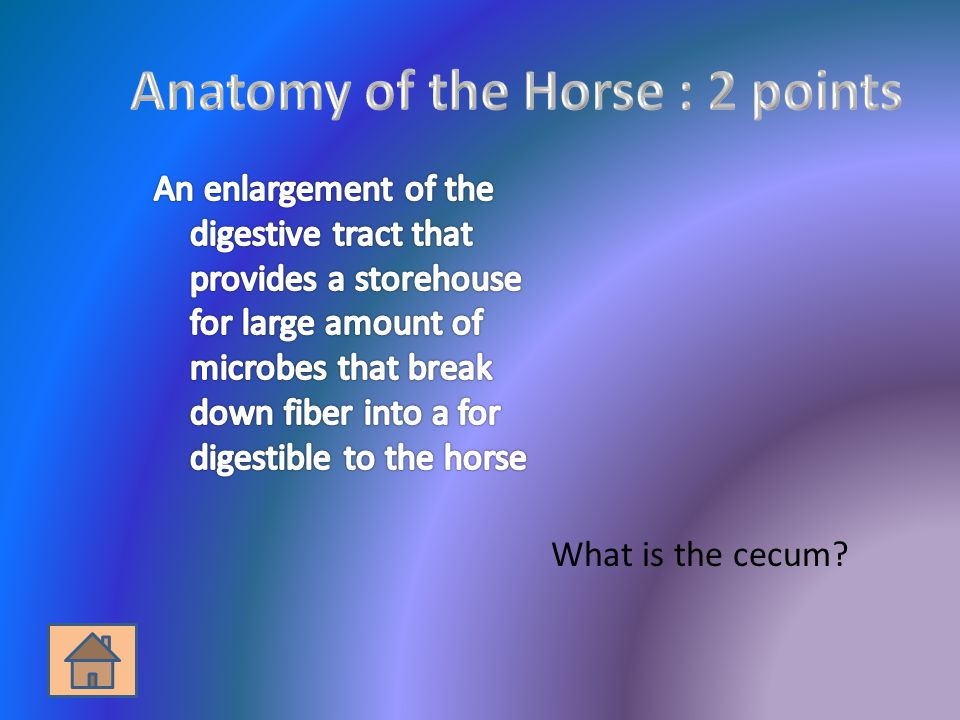 What is the cecum