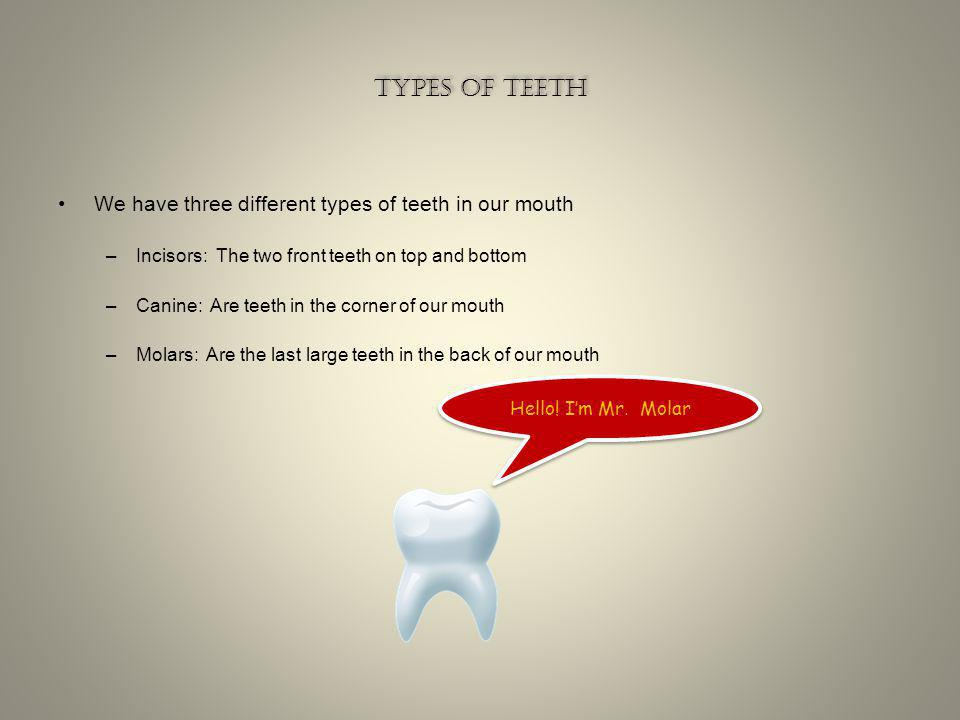 The early years cont The early years cont The Incisors are usually the first to fall out The Incisors are the sharpest teeth in the mouth They are bui