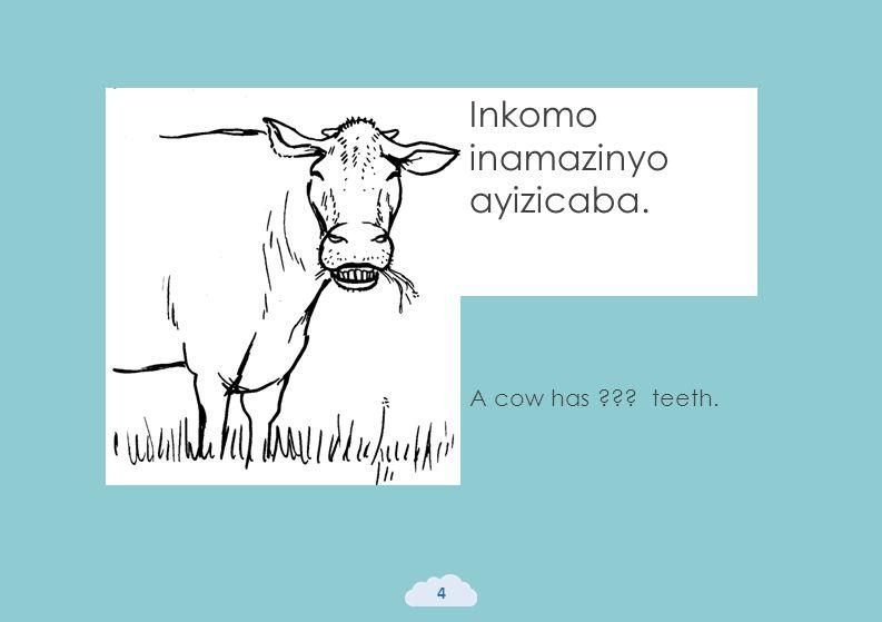 Inkomo inamazinyo ayizicaba. 4 A cow has ??? teeth.