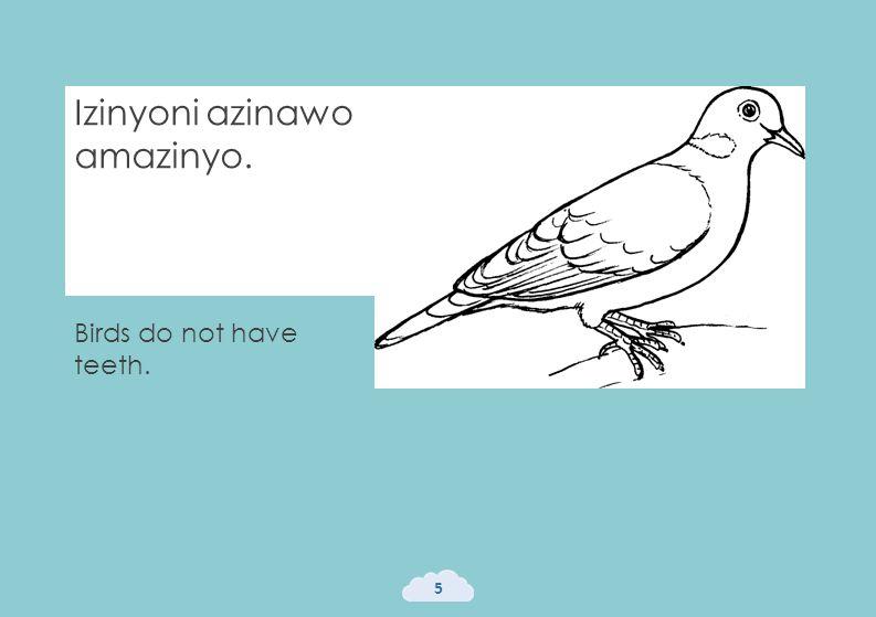 Izinyoni azinawo amazinyo. 5 Birds do not have teeth.