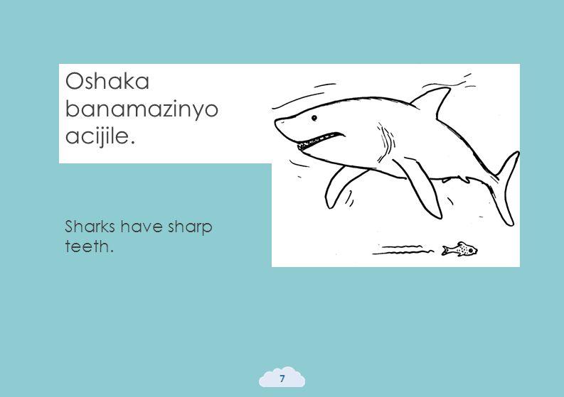 Oshaka banamazinyo acijile. 7 Sharks have sharp teeth.