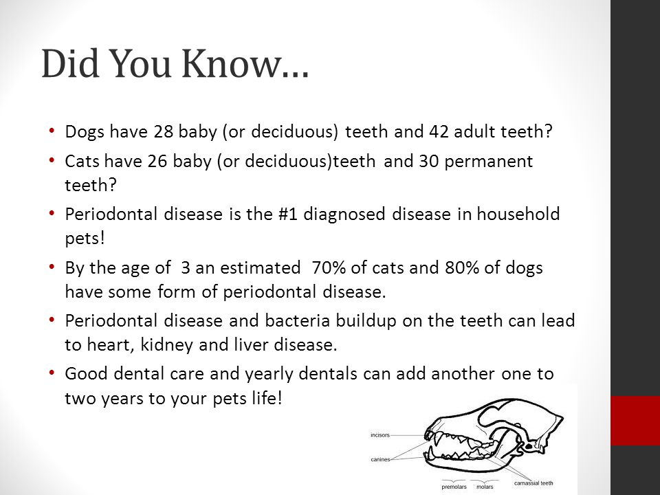 Did You Know… Dogs have 28 baby (or deciduous) teeth and 42 adult teeth? Cats have 26 baby (or deciduous)teeth and 30 permanent teeth? Periodontal dis