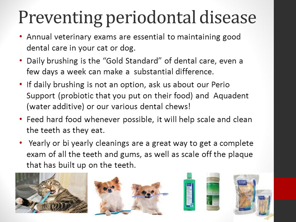 Preventing periodontal disease Annual veterinary exams are essential to maintaining good dental care in your cat or dog.