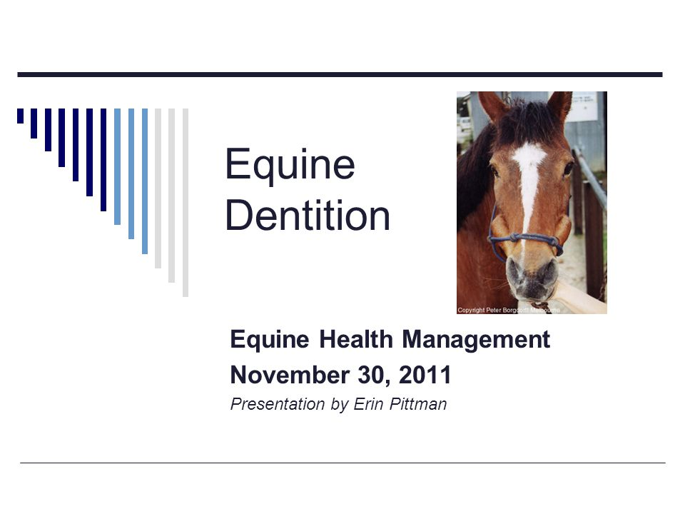 Equine Dentition Equine Health Management November 30, 2011 Presentation by Erin Pittman