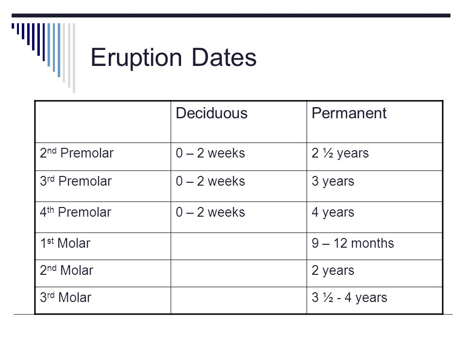 Eruption Dates DeciduousPermanent 2 nd Premolar0 – 2 weeks2 ½ years 3 rd Premolar0 – 2 weeks3 years 4 th Premolar0 – 2 weeks4 years 1 st Molar9 – 12 months 2 nd Molar2 years 3 rd Molar3 ½ - 4 years