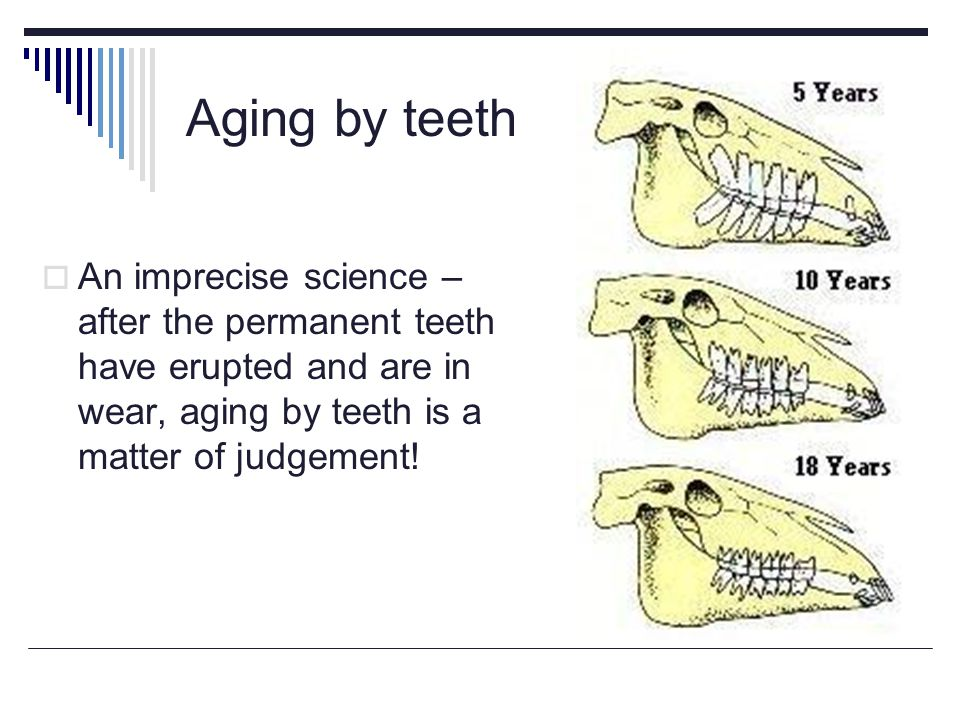 Aging by teeth An imprecise science – after the permanent teeth have erupted and are in wear, aging by teeth is a matter of judgement!