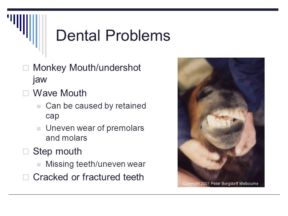 Dental Problems Monkey Mouth/undershot jaw Wave Mouth Can be caused by retained cap Uneven wear of premolars and molars Step mouth Missing teeth/uneven wear Cracked or fractured teeth
