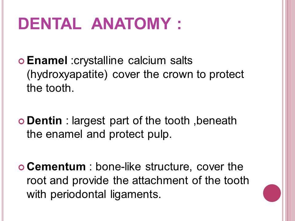 Enamel :crystalline calcium salts (hydroxyapatite) cover the crown to protect the tooth.