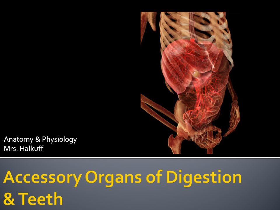 Anatomy & Physiology Mrs. Halkuff