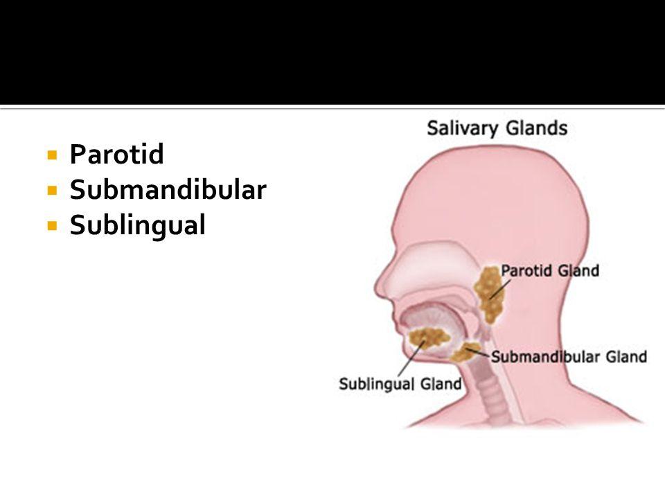 Parotid Submandibular Sublingual