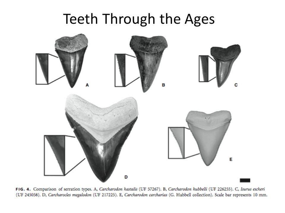 Teeth Through the Ages