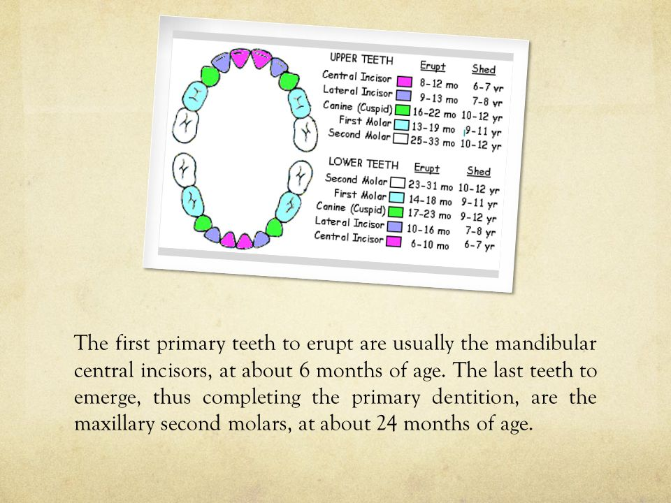 The complete primary dentition is in the mouth from 2 years to 5 3/4 or 6 years of age, when no permanent teeth are present.