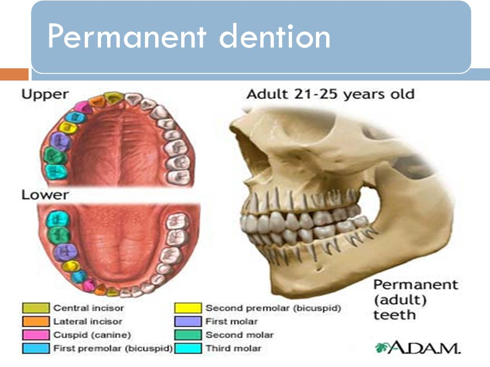 Permanent dention