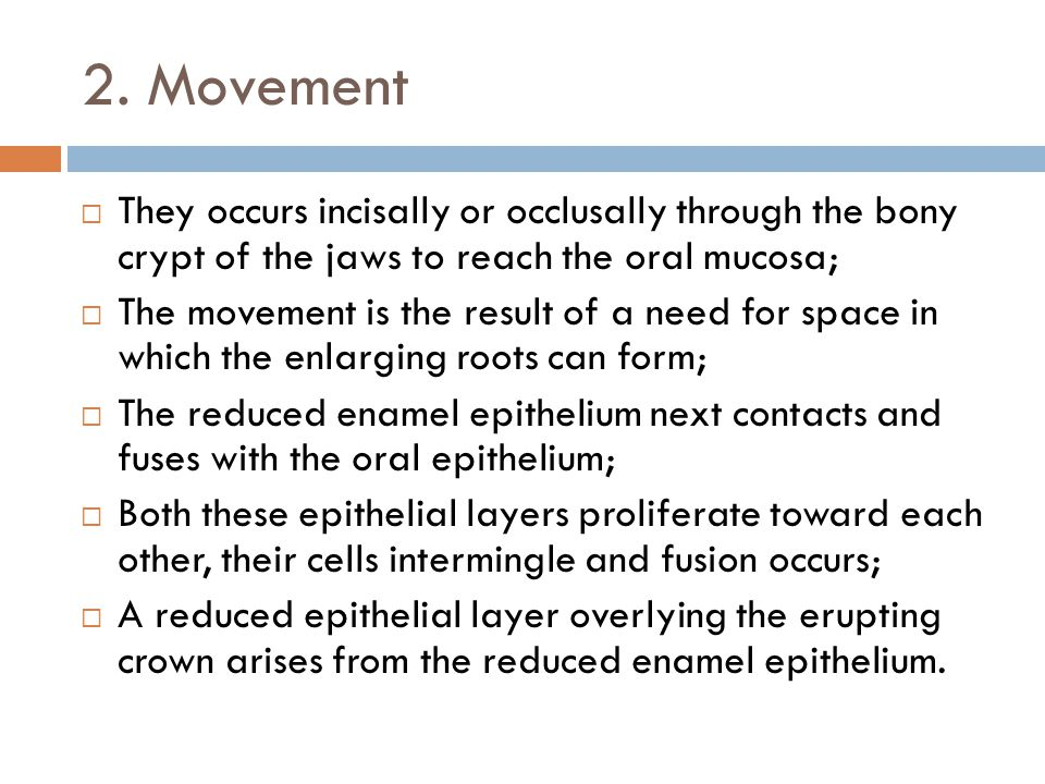 2. Movement They occurs incisally or occlusally through the bony crypt of the jaws to reach the oral mucosa; The movement is the result of a need for