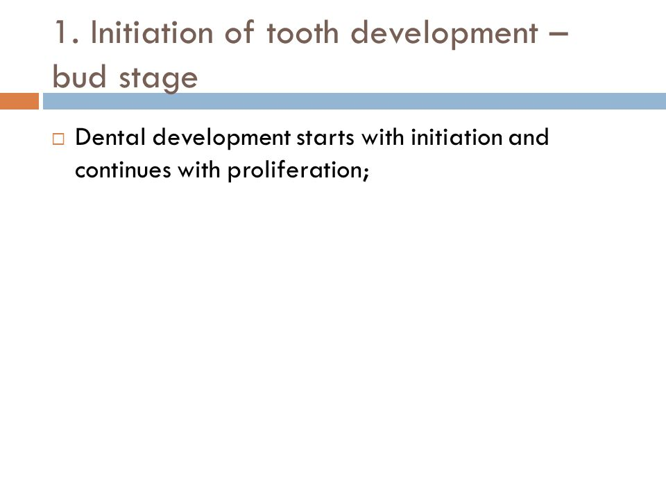 1. Initiation of tooth development – bud stage Dental development starts with initiation and continues with proliferation;