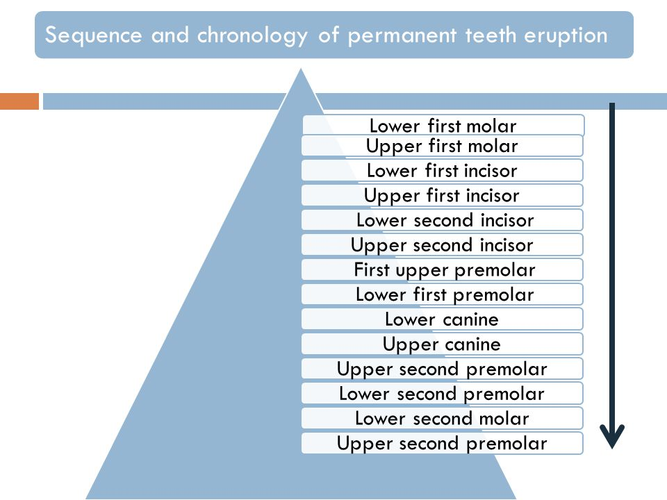 Sequence and chronology of permanent teeth eruption Lower first molarUpper first molarLower first incisorUpper first incisor Lower second incisorUpper second incisor First upper premolar Lower first premolarLower canineUpper canineUpper second premolarLower second premolarLower second molarUpper second premolar