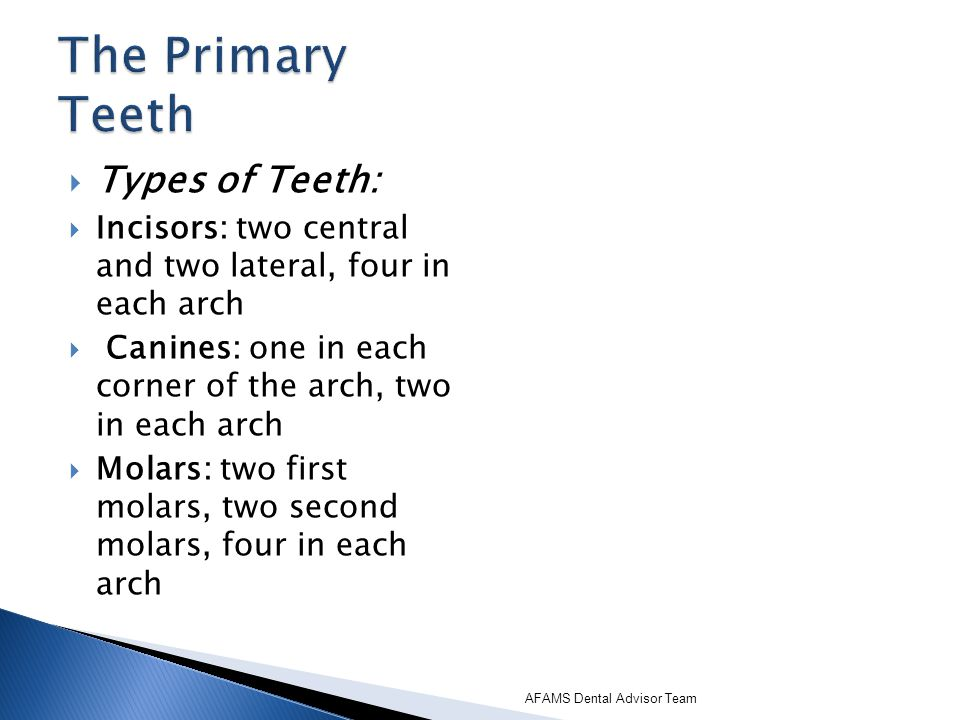 Types of Teeth: Incisors: two central and two lateral, four in each arch Canines: one in each corner of the arch, two in each arch Molars: two first m
