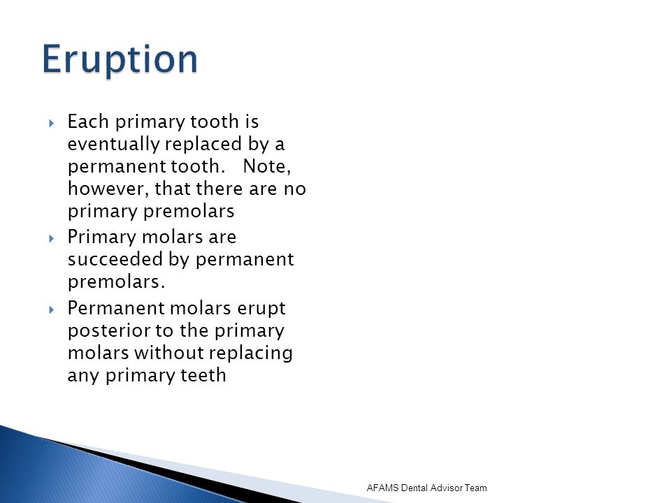 Each primary tooth is eventually replaced by a permanent tooth. Note, however, that there are no primary premolars Primary molars are succeeded by per