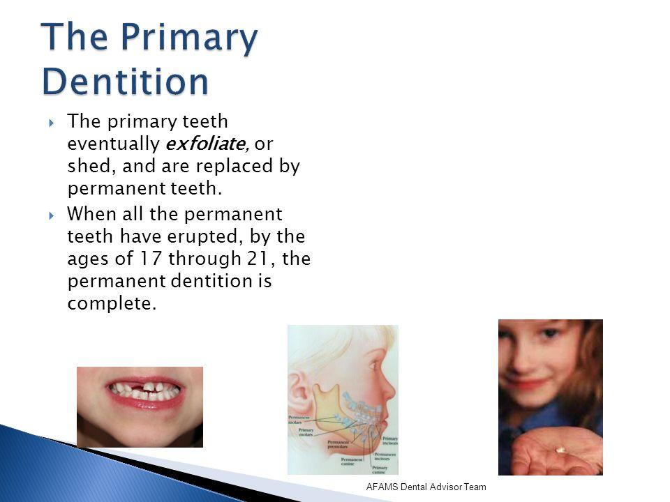 There are 32 permanent teeth, 16 maxillary and 16 mandibular.
