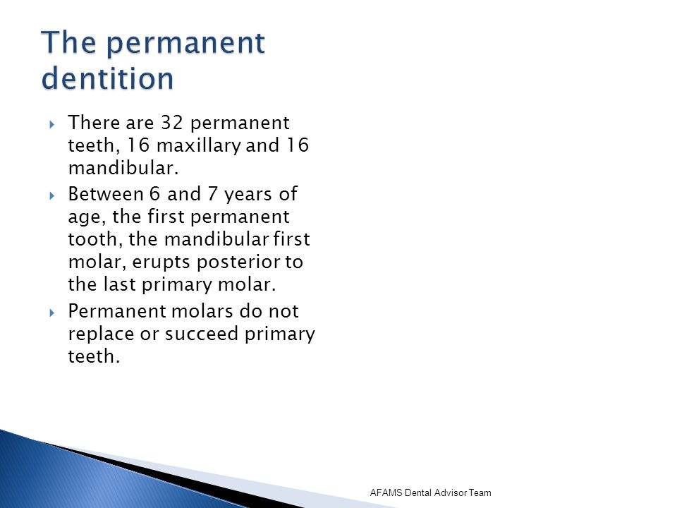 There are 32 permanent teeth, 16 maxillary and 16 mandibular. Between 6 and 7 years of age, the first permanent tooth, the mandibular first molar, eru