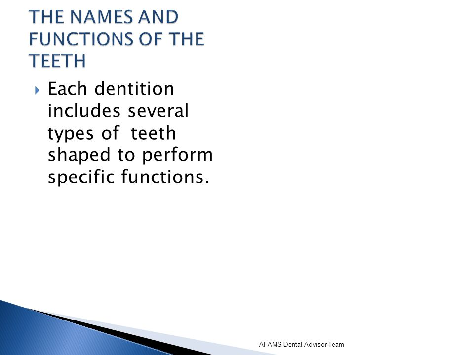 Each dentition includes several types of teeth shaped to perform specific functions. AFAMS Dental Advisor Team