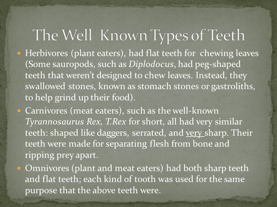 Herbivores (plant eaters), had flat teeth for chewing leaves (Some sauropods, such as Diplodocus, had peg-shaped teeth that werent designed to chew le