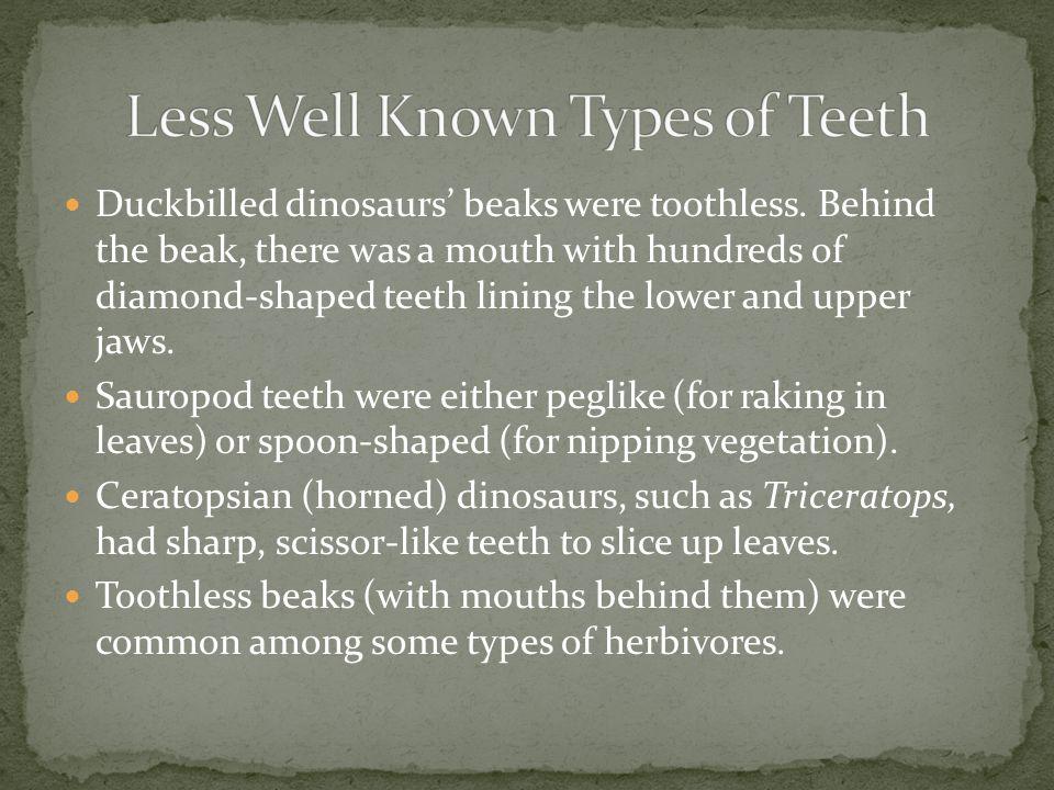 Duckbilled dinosaurs beaks were toothless.