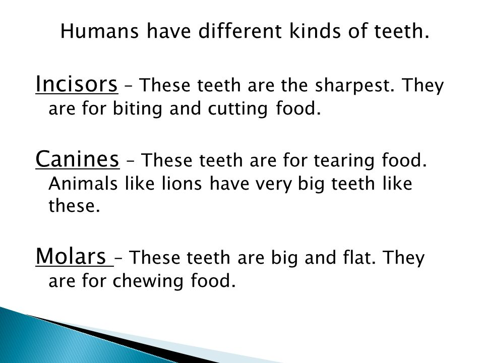 Humans have different kinds of teeth. Incisors – These teeth are the sharpest. They are for biting and cutting food. Canines – These teeth are for tea