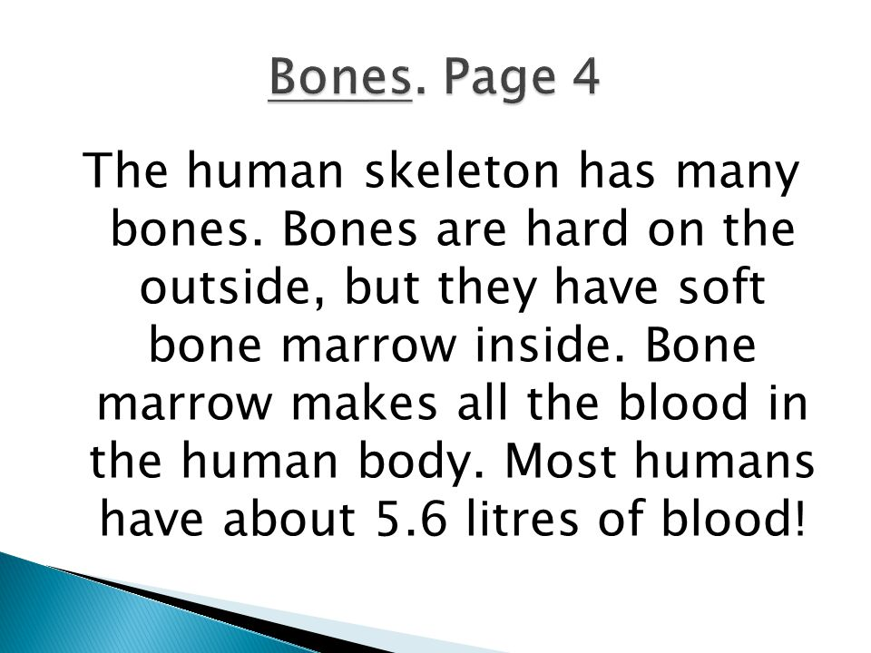 The human skeleton has many bones. Bones are hard on the outside, but they have soft bone marrow inside. Bone marrow makes all the blood in the human