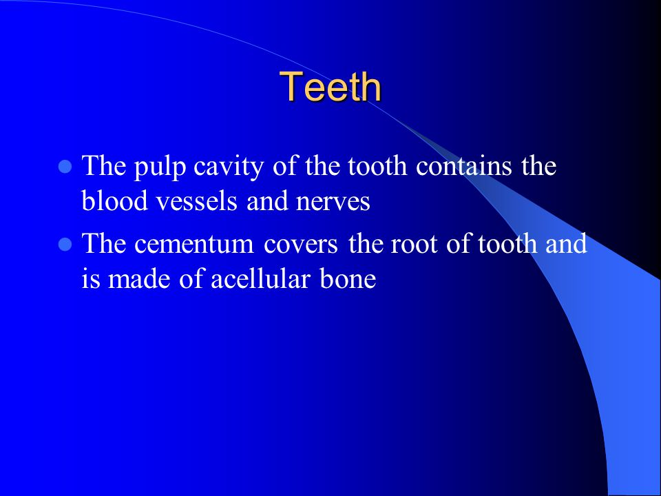 Teeth The pulp cavity of the tooth contains the blood vessels and nerves The cementum covers the root of tooth and is made of acellular bone