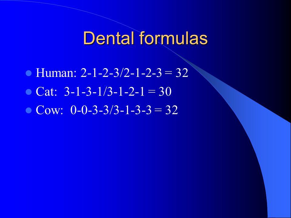 Dental formulas Human: 2-1-2-3/2-1-2-3 = 32 Cat: 3-1-3-1/3-1-2-1 = 30 Cow: 0-0-3-3/3-1-3-3 = 32