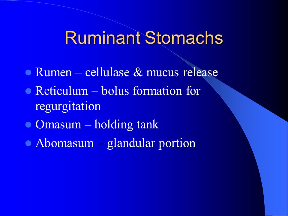 Ruminant Stomachs Rumen – cellulase & mucus release Reticulum – bolus formation for regurgitation Omasum – holding tank Abomasum – glandular portion