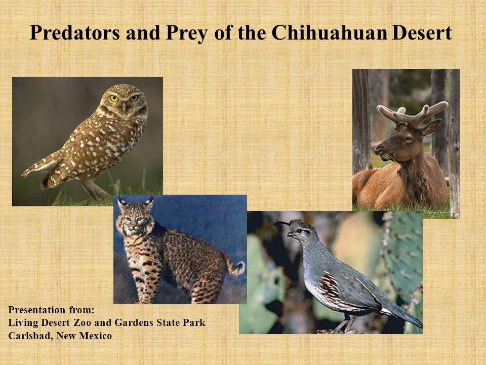 Predators Predators are animals that eat other animals for food. Barn Owl Mountain Lion