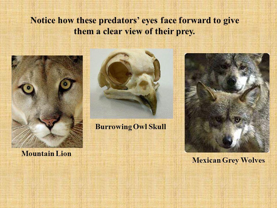 Predator or Prey.