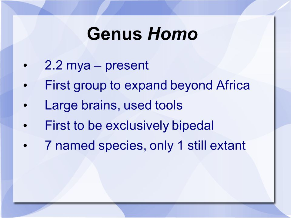 Genus Homo 2.2 mya – present First group to expand beyond Africa Large brains, used tools First to be exclusively bipedal 7 named species, only 1 stil