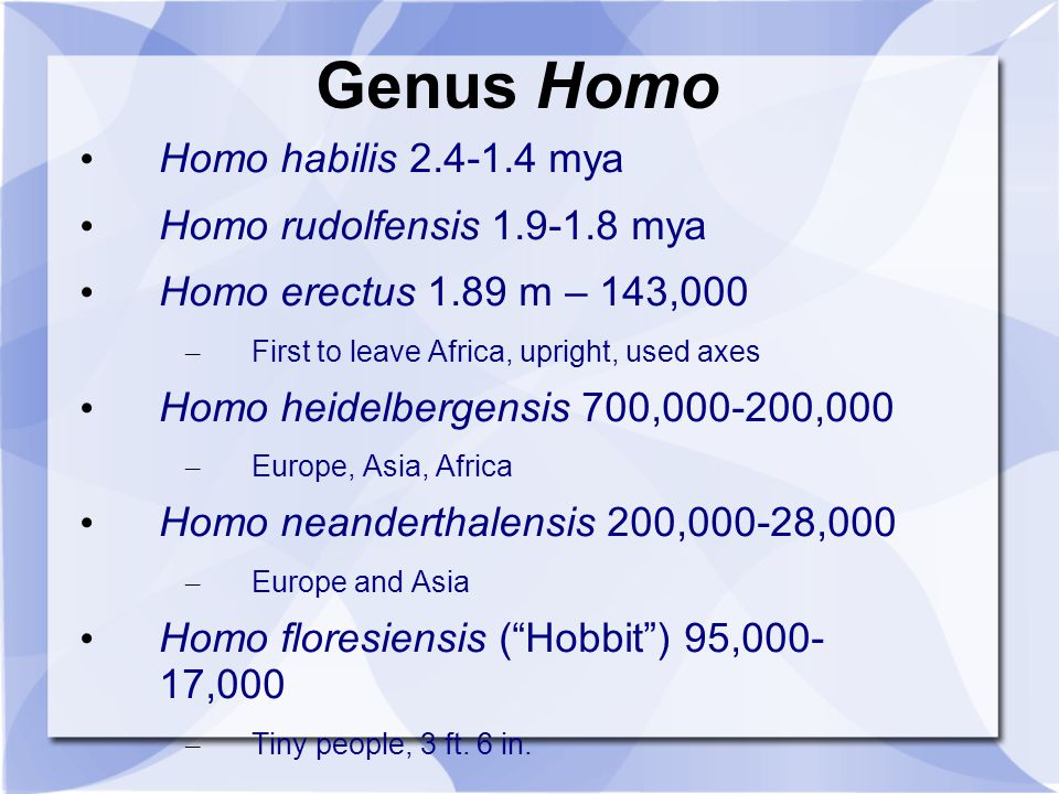 Genus Homo Homo habilis 2.4-1.4 mya Homo rudolfensis 1.9-1.8 mya Homo erectus 1.89 m – 143,000 – First to leave Africa, upright, used axes Homo heidel