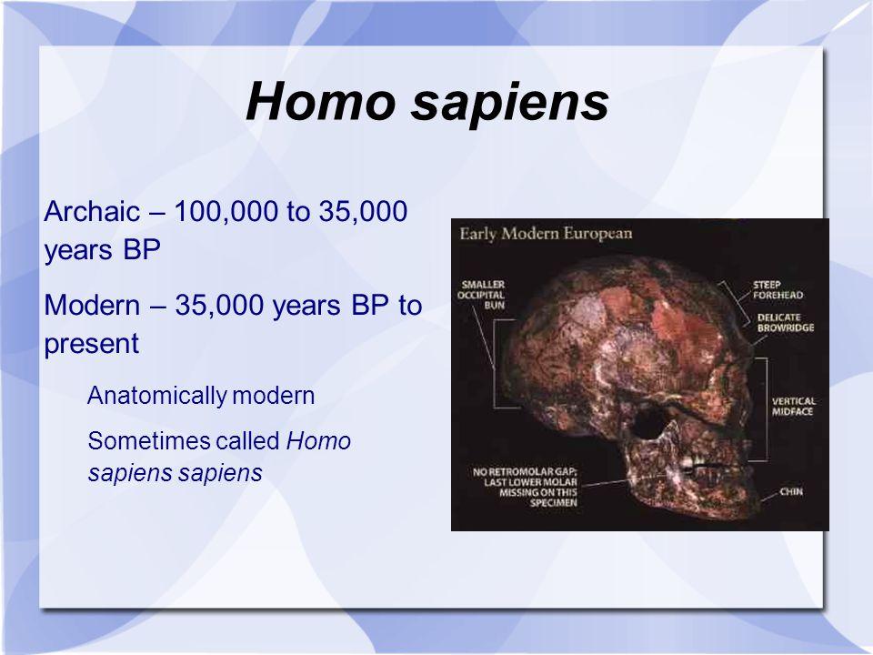 Homo sapiens Archaic – 100,000 to 35,000 years BP Modern – 35,000 years BP to present Anatomically modern Sometimes called Homo sapiens sapiens