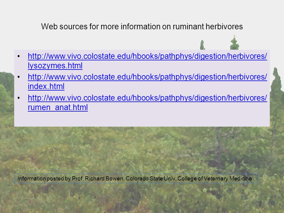 Web sources for more information on ruminant herbivores http://www.vivo.colostate.edu/hbooks/pathphys/digestion/herbivores/ lysozymes.htmlhttp://www.v
