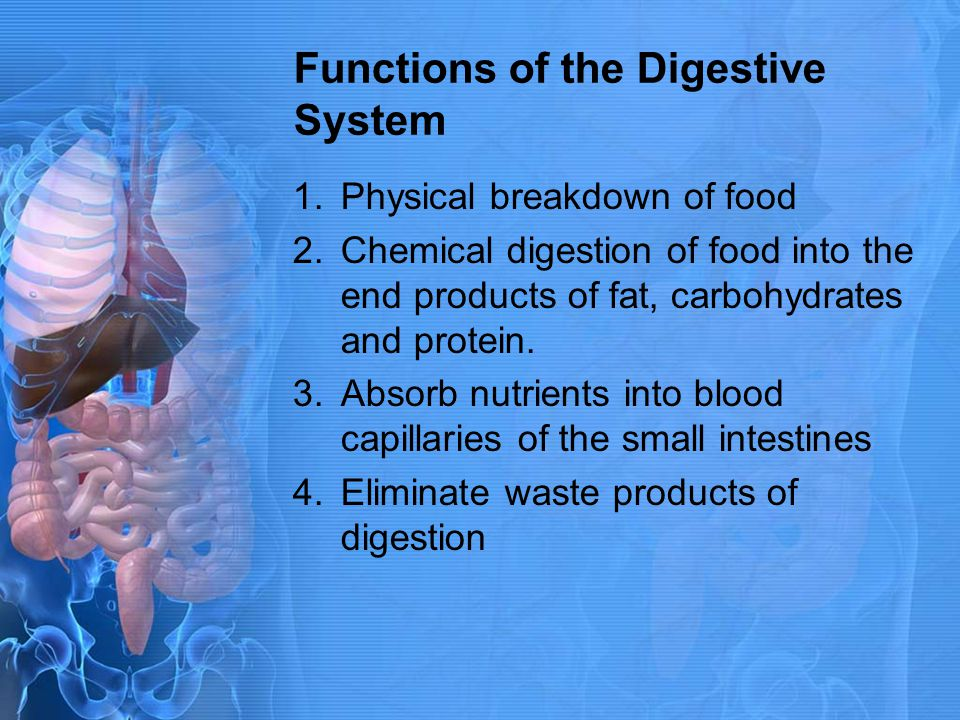1.Physical breakdown of food 2.Chemical digestion of food into the end products of fat, carbohydrates and protein. 3.Absorb nutrients into blood capil