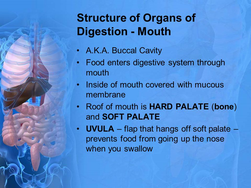 Structure of Organs of Digestion - Mouth A.K.A. Buccal Cavity Food enters digestive system through mouth Inside of mouth covered with mucous membrane
